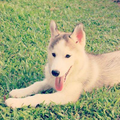 อยากดั้ยยยยO>___<o Dog Cute