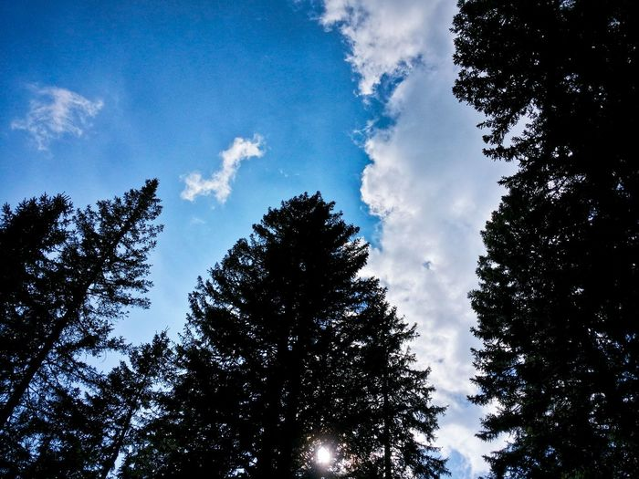 Neck Stretching Never Tired Of Looking Up Firs And Clouds Juxtaposing Practice Breath Of The Elements Asiago Highland Asiago Vicenza Veneto Italy Travel Photography Travel Voyage Traveling Mobile Photography Fine Art Photography