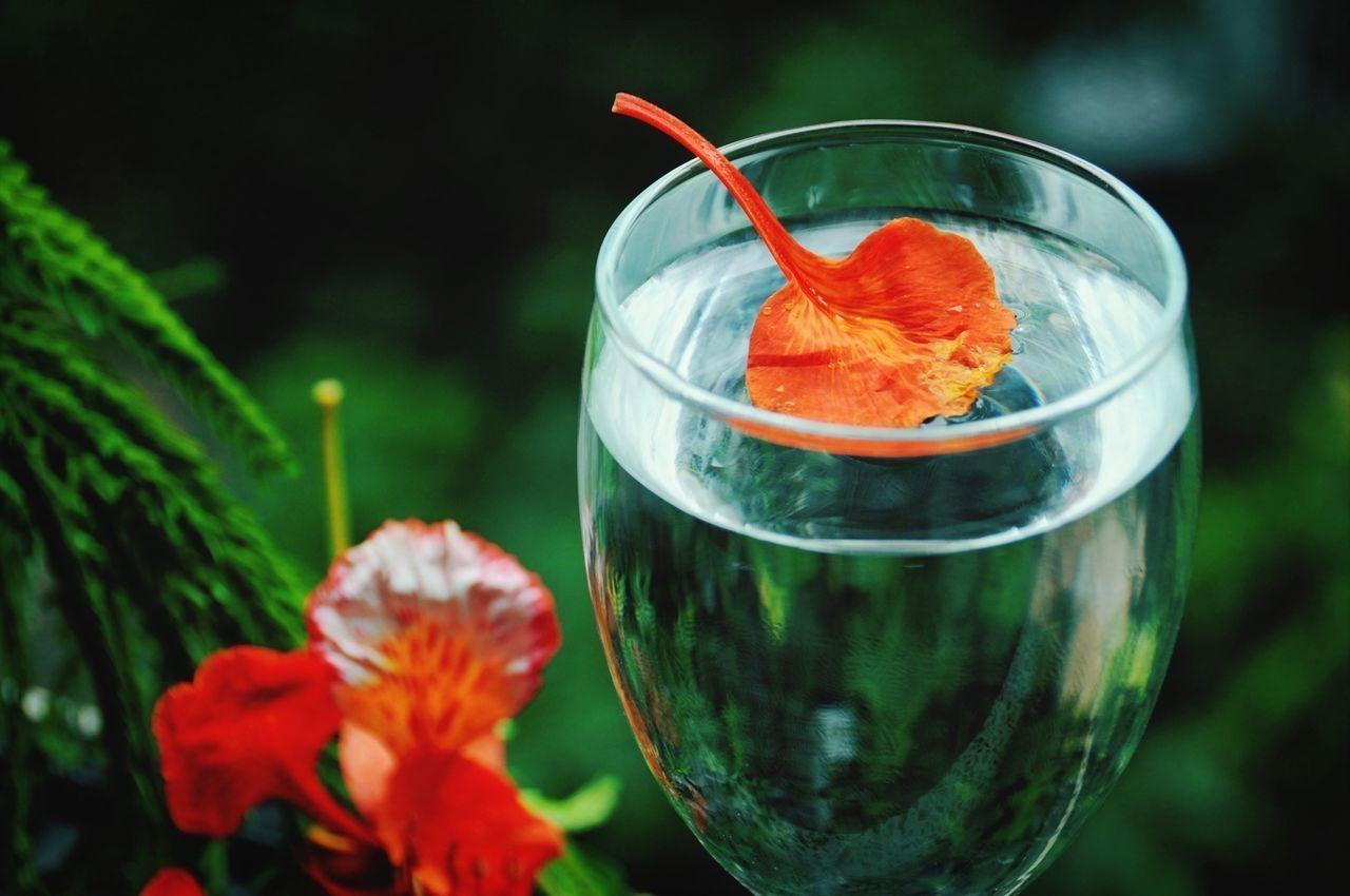 Orange Petal In Drinking Glass