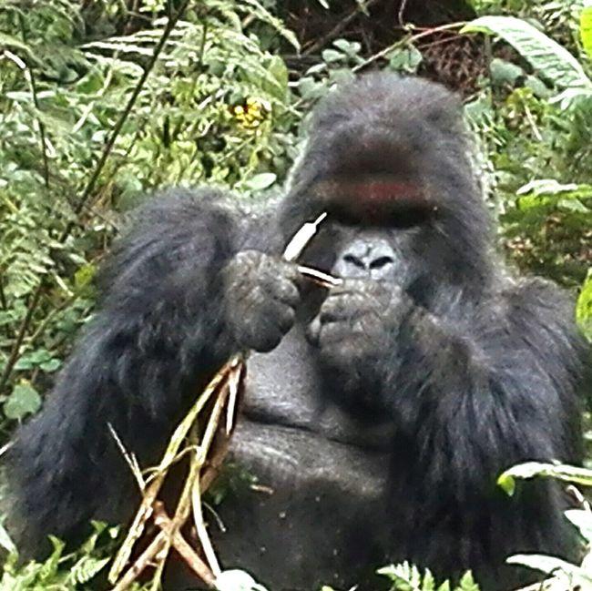 Grupo 'PABLO' Rwanda Gorilla Trek Travel Trekking Nature Love African Safari Enjoying Life ♥