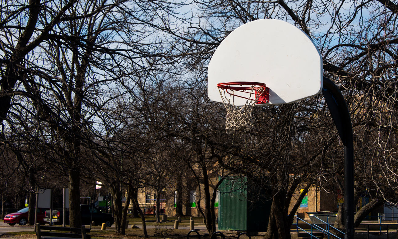 bare tree, tree, branch, basketball - sport, basketball hoop, nature, outdoors, sky, day, clear sky, no people, architecture, city, beauty in nature