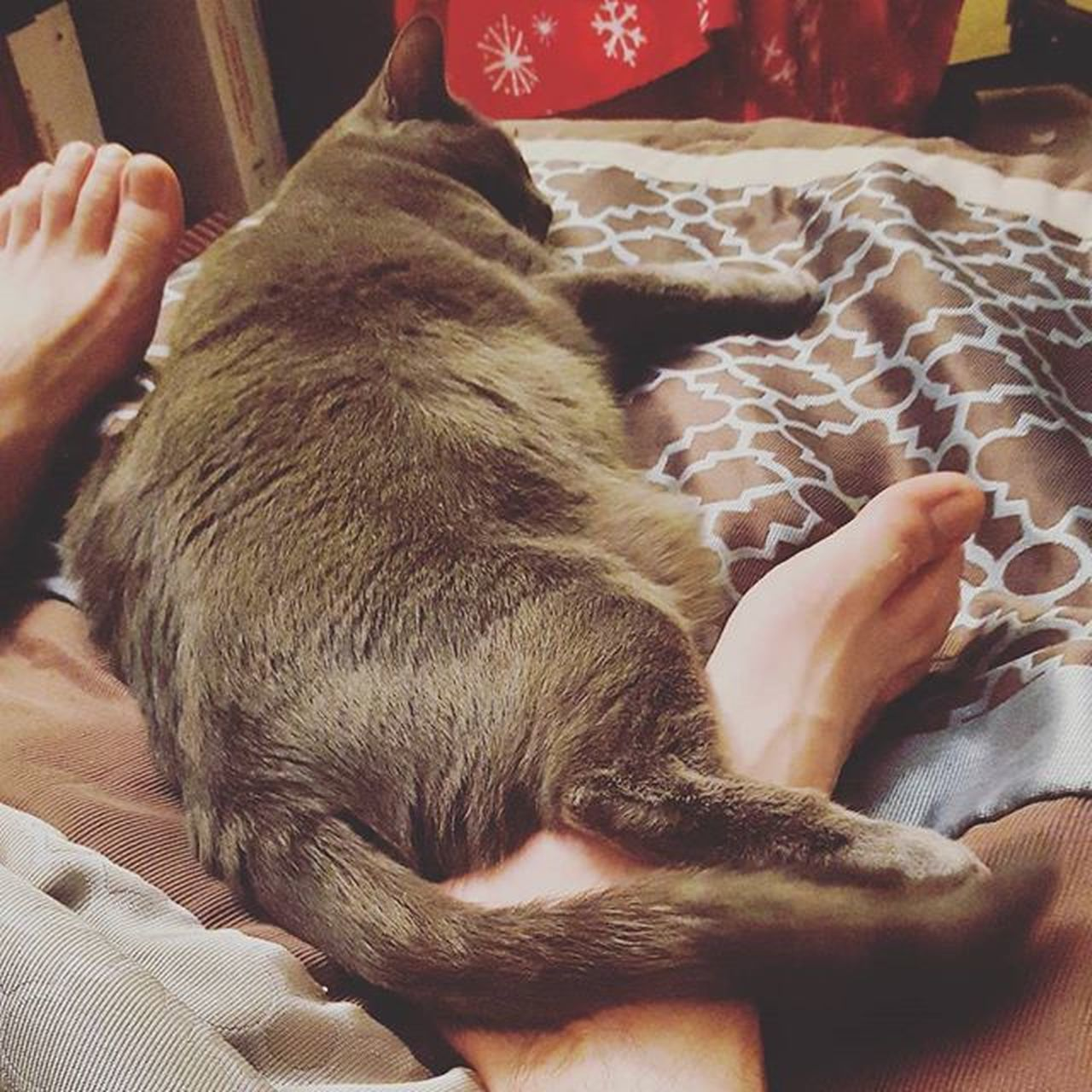 pets, mammal, indoors, domestic animals, relaxation, domestic cat, bed, one person, real people, one animal, home interior, comfortable, human body part, human hand, animal themes, low section, day, people