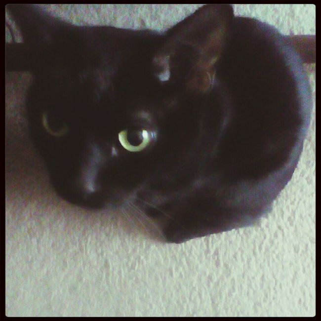 Sirius Black The Cat. Taken on Kindle. It's very hard to photograph this cat, he doesn't stand still! Catoftheday. My Cat. I Love My Animals!