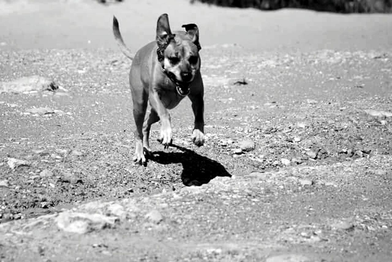 Africa Freedom Truelove Capturing Freedom Lovethisdog Runningasifthereisnotomorrow Mydog Goodvibes Toogoodtobetrue Careforthem