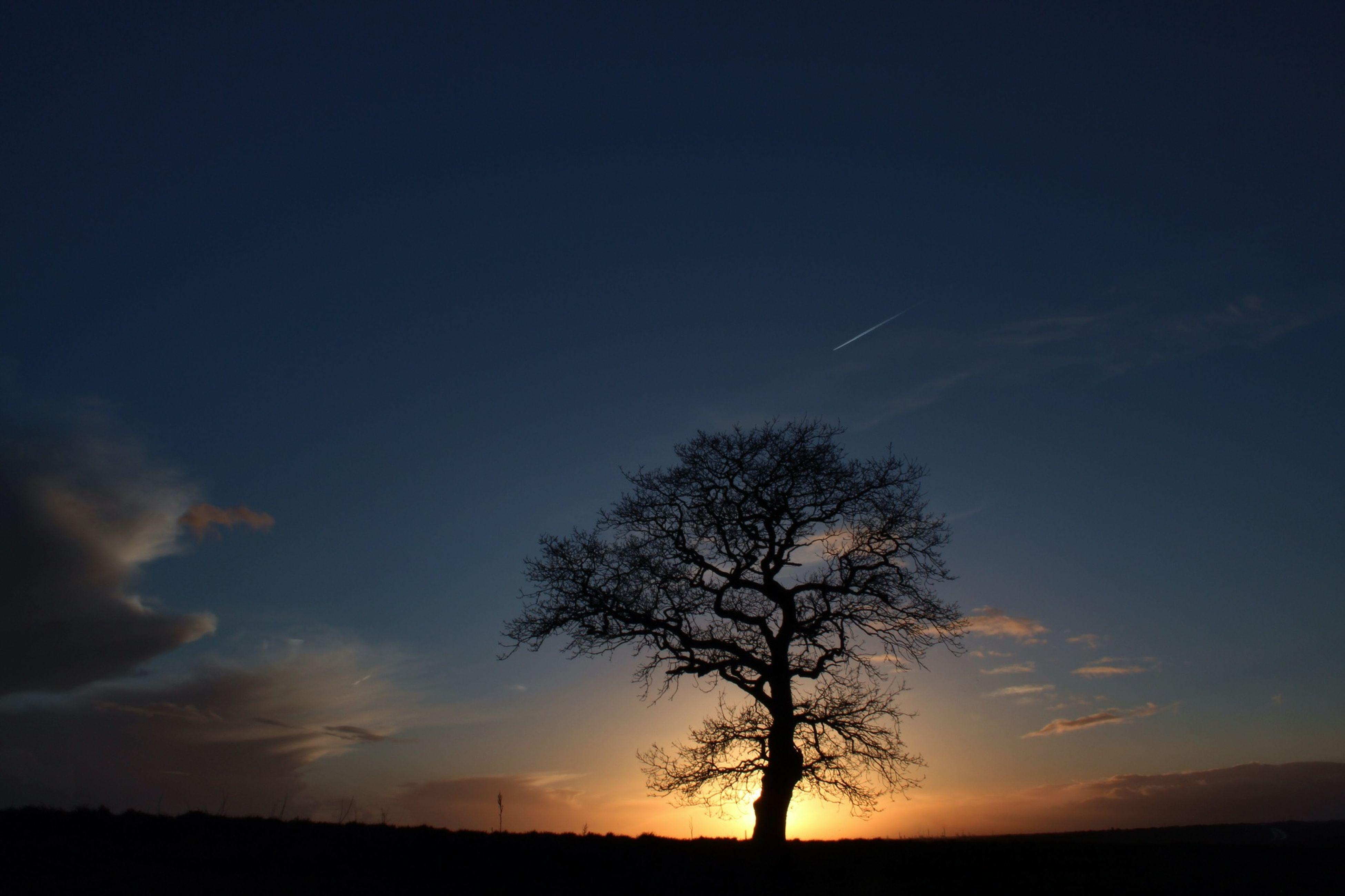 silhouette, tranquility, tranquil scene, sunset, tree, scenics, beauty in nature, sky, bare tree, landscape, nature, idyllic, field, non-urban scene, branch, non urban scene, outdoors, cloud, no people, remote