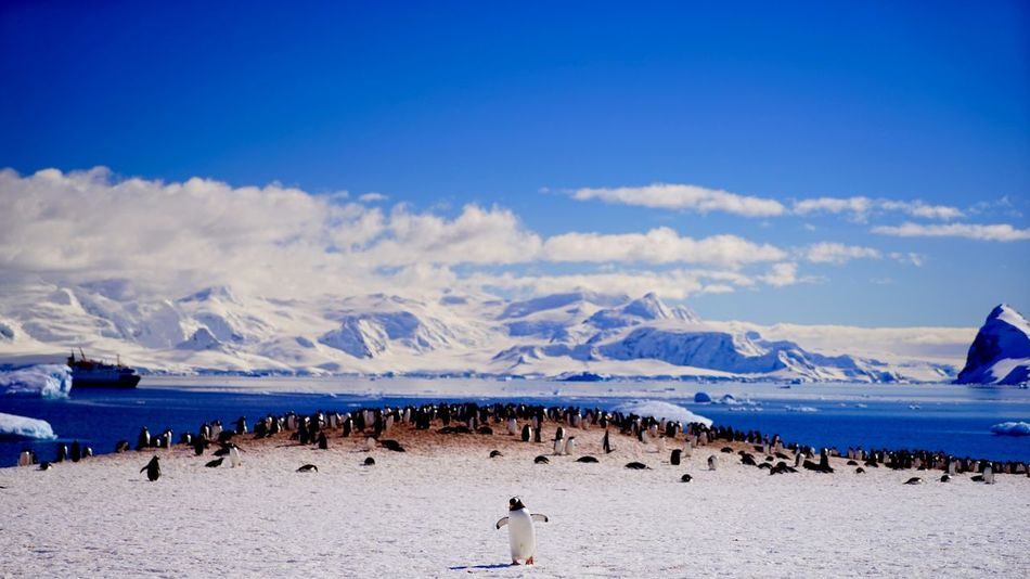 Antarctica South Pole Expedition South Pole Pinguins  Welcoming Amazing View Animals In The Wild Wildlife Wildlife Photography Ince Mountain Ships At Sea Sea Ice Icebergs Ice Labdscape Nature Original Experiences Feel The Journey Showcase June EyeEm X Canon - Feel The Journey