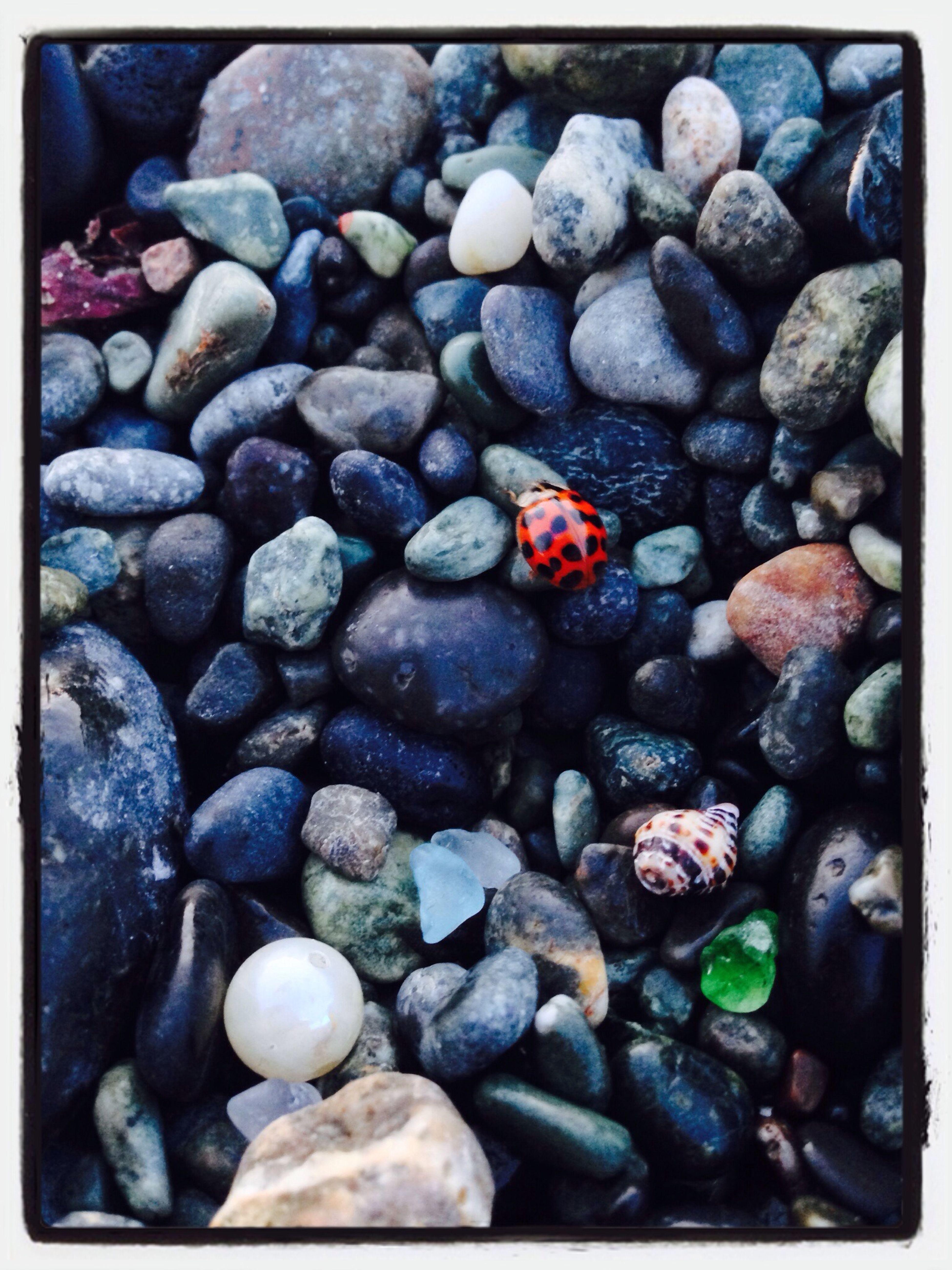 てんとうむし、かいがら、がらす、しんじゅ、いし Life Is A Beach Little Turn Sandcastles Treasure Hunting