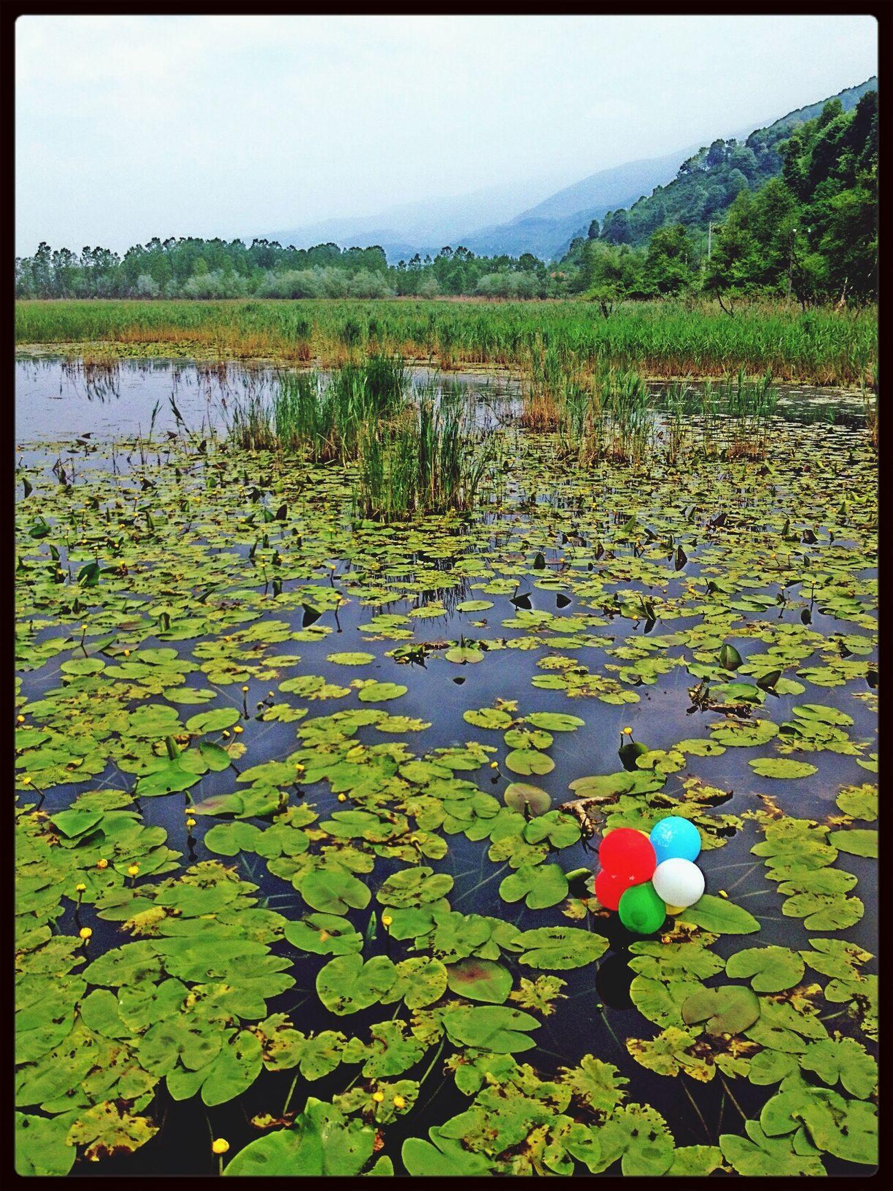 Eftenigolu Lake Nilüfer Yeşil