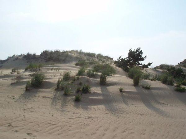 Sand Outer Banks, NC Dunes
