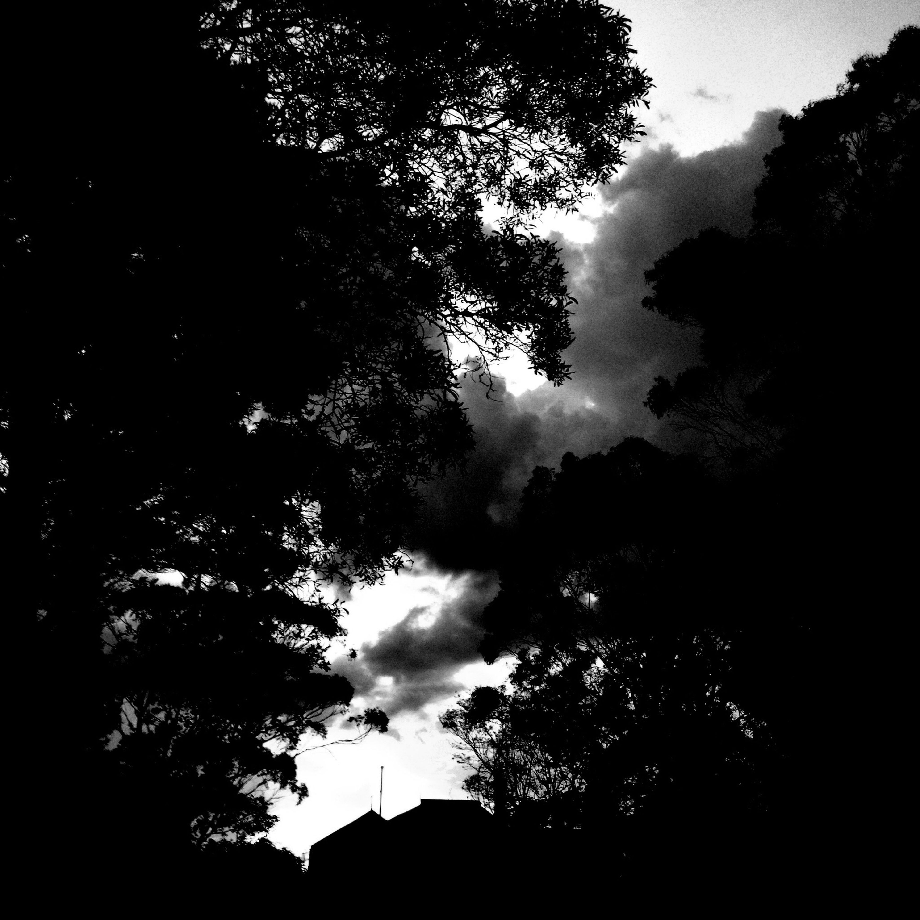 tree, silhouette, low angle view, sky, tranquility, beauty in nature, nature, cloud - sky, branch, scenics, tranquil scene, growth, dusk, outdoors, cloudy, no people, dark, outline, cloud, sunset