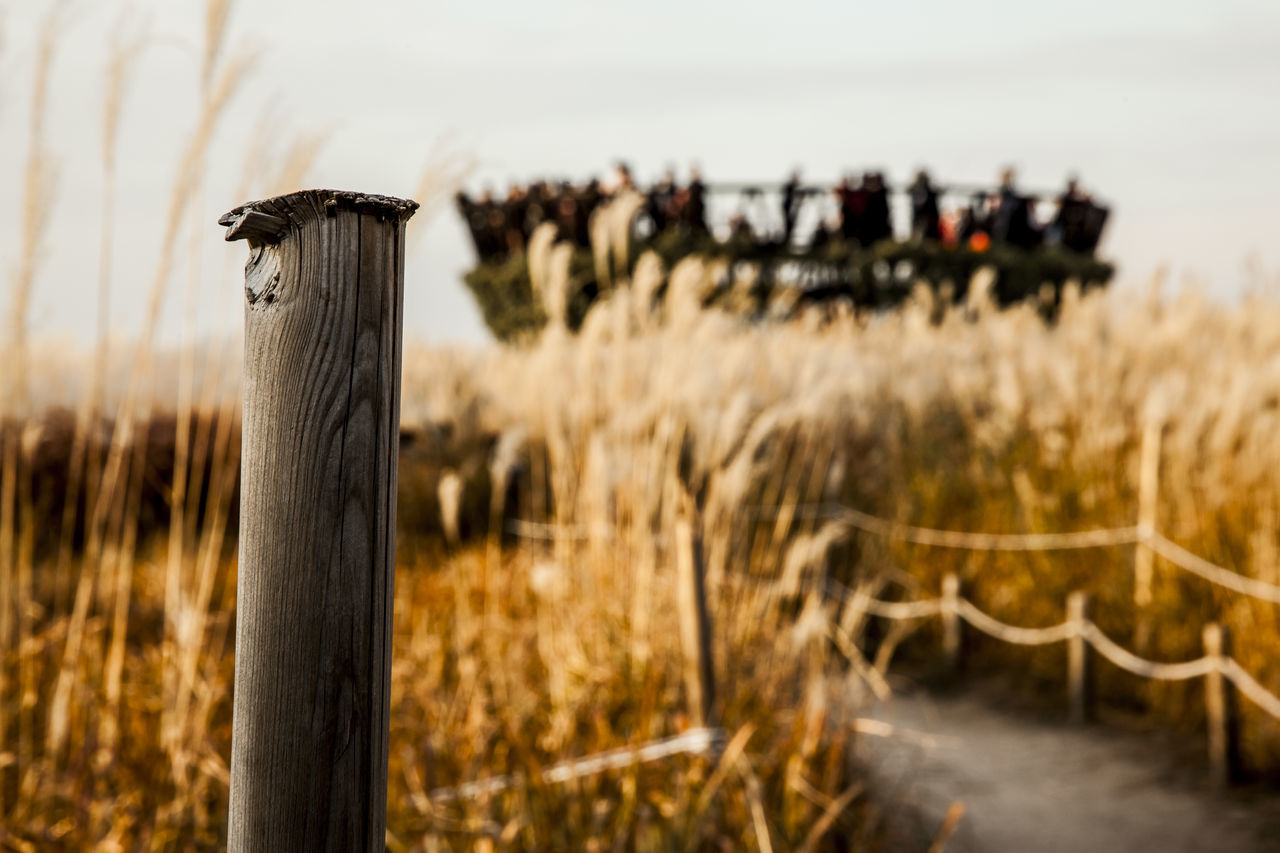 Beauty In Nature Day Dry Fence Fences Field Focus On Foreground Grass Growing Growth Metal Mystery No People Observatory Protection Safety Selective Focus Silver Grass Sky Park Tranquility Tree Trunk Wood Wood - Material Wooden