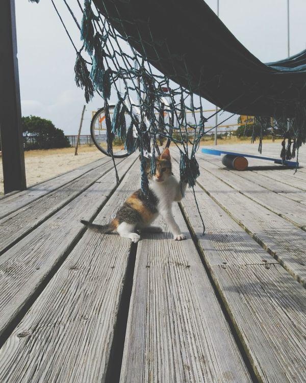 Kitty Cat Kitty Love♥ Cute Cute Pets