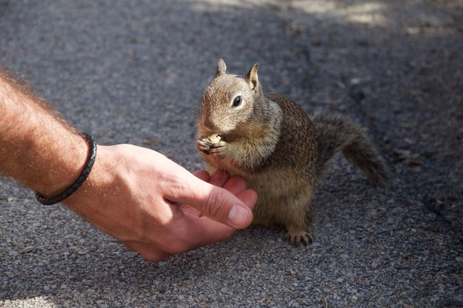 Squirrel Animal Close-up Hand Eating California Cute Cute Pets Nature Nature_collection Traveling Travel Eye Em A Traveller EyeEm Gallery Eye4photography  EyeEmBestPics EyeEm Best Shots EyeEm Best Edits Eye Em Nature Lover Nature's Diversities