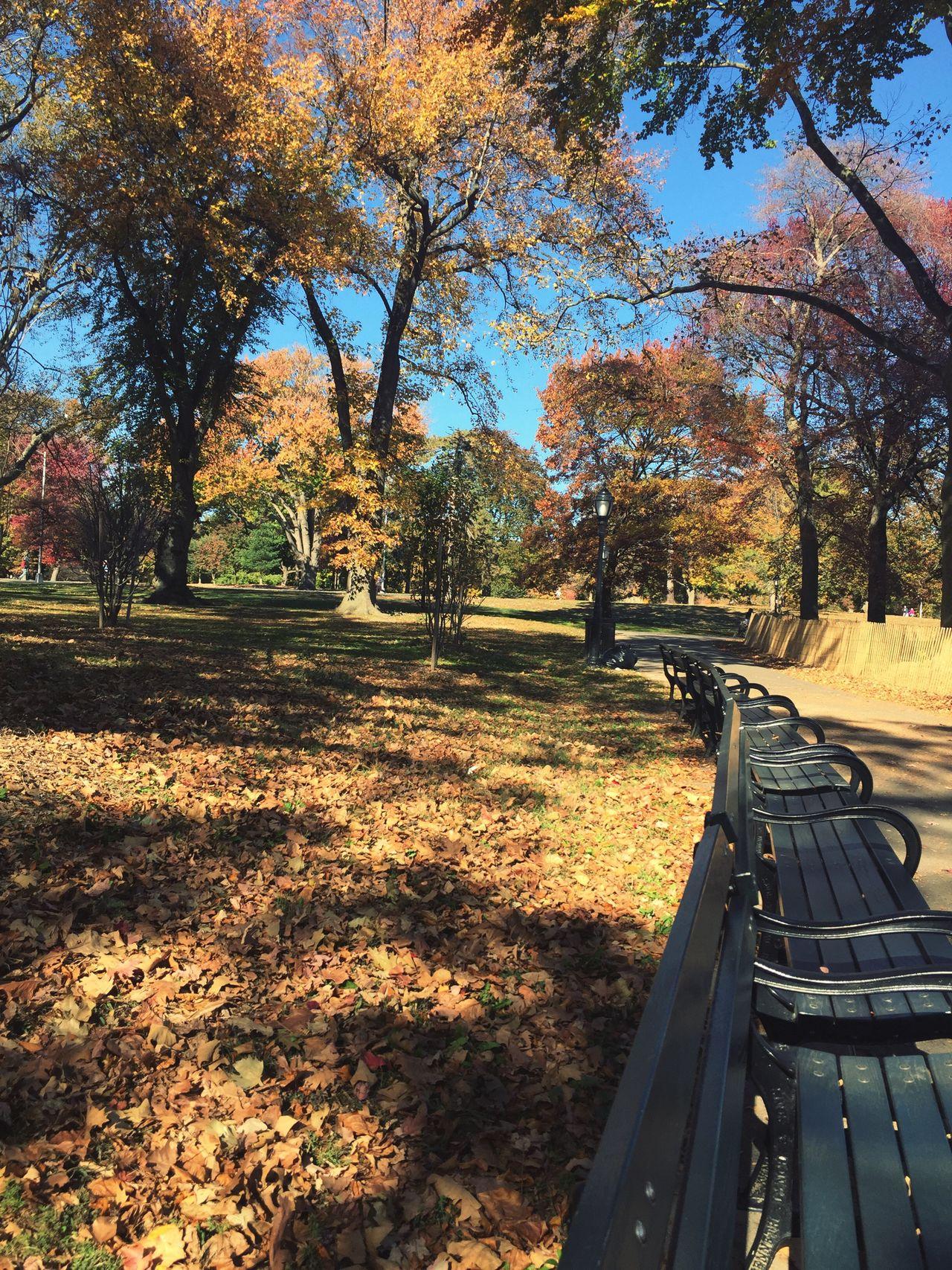Prospect Park Brooklyn Park New York City