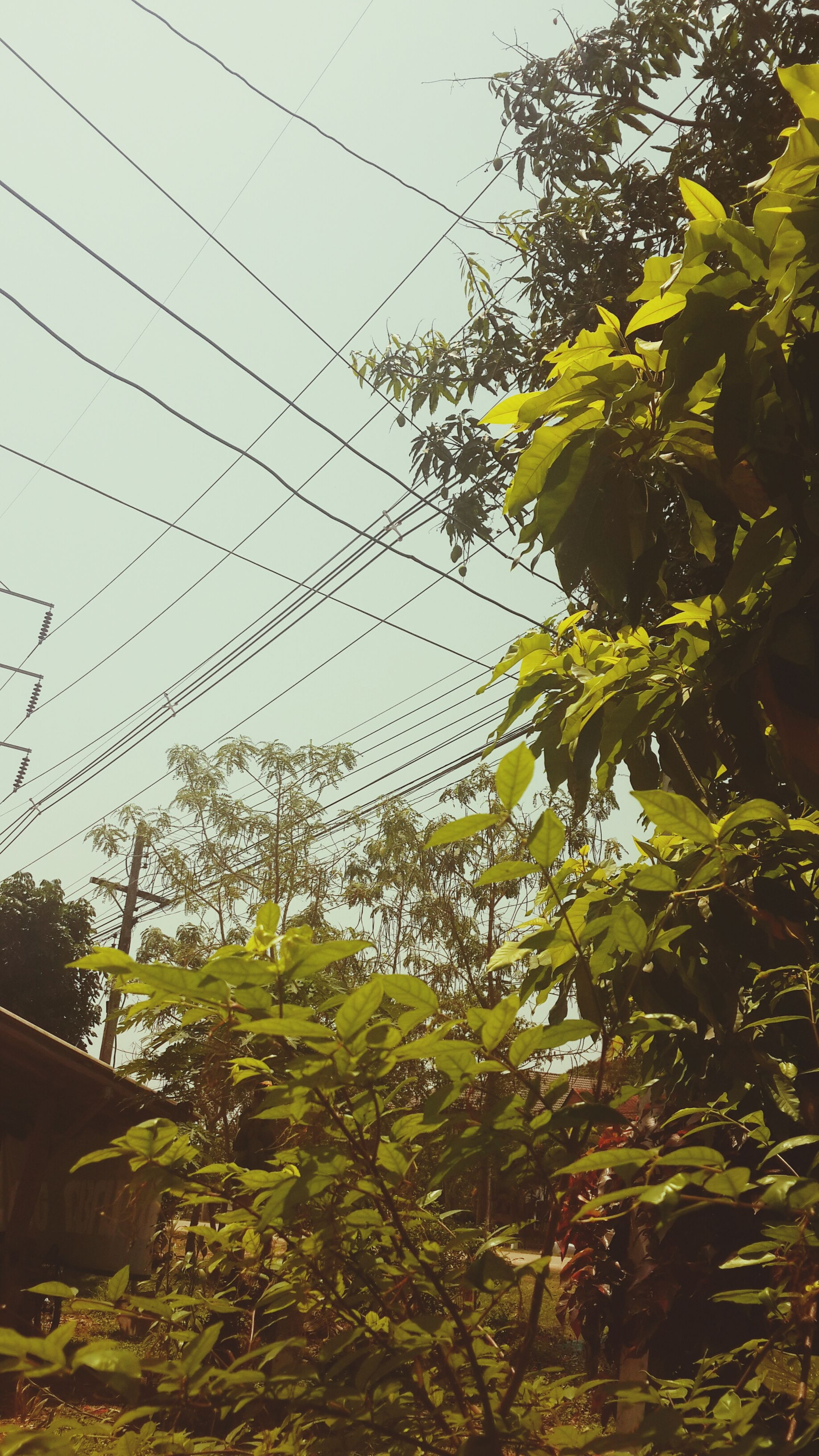growth, power line, tree, plant, green color, clear sky, nature, low angle view, sky, electricity pylon, cable, leaf, day, outdoors, no people, built structure, electricity, building exterior, beauty in nature, connection