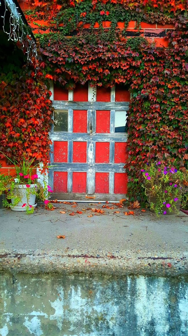 Red Built Structure Plant Ivy Building Exterior Architecture Outdoors Day Growth Leaf No People Nature Brick Wall Green Color Water Beauty In Nature Creeper Plant Fragility Living Organism Window Brick Walls Foliage, Vegetation, Plants, Green, Leaves, Leafage, Undergrowth, Underbrush, Plant Life, Flora Complexity Multi Colored Nature