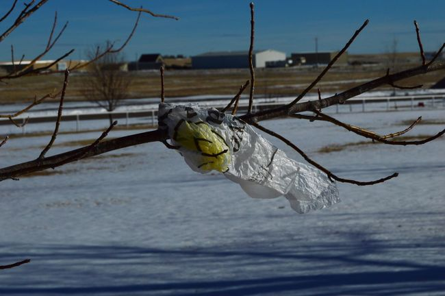 Plastic bag branch Close-up Cold Temperature Day Focus On Foreground Nature Outdoors Snow Winter