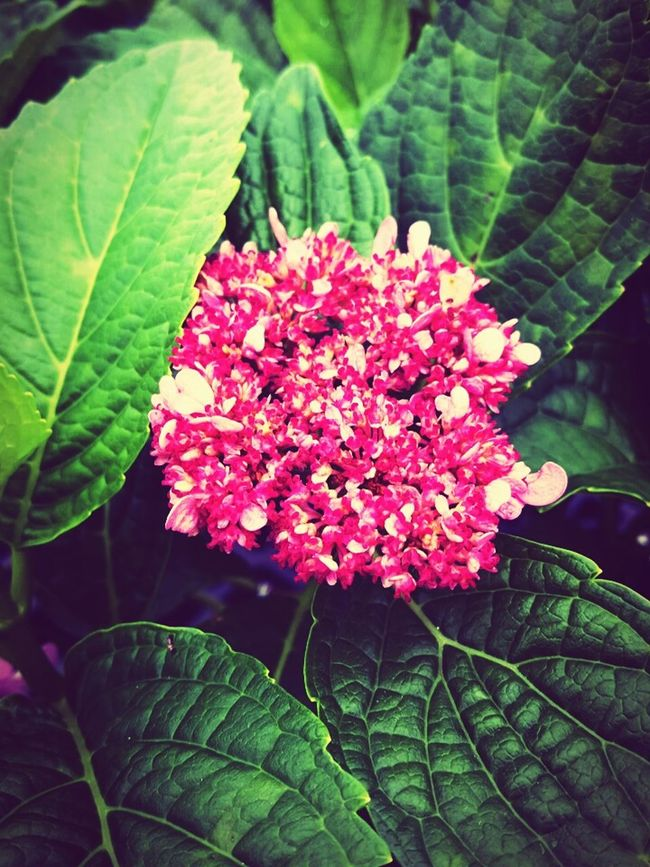 Pink Flower Small Flowers Green Green Green!  Green Leaves Fresh On Eyeem  Small Pink Flowers 😊 Florecitas Green Color Pink Color Like A Dream Best Shots EyeEm