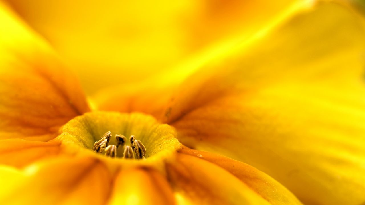 Backgrounds Close-up Fragility Full Frame Nature No People Freshness Beauty In Nature Day Outdoors Yellow Flower Yellow Primrose