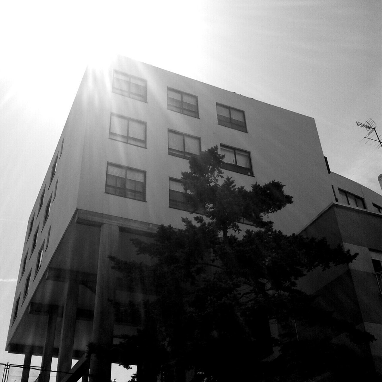 building exterior, low angle view, architecture, built structure, window, no people, tree, outdoors, modern, day, city, sky