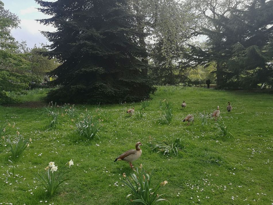 Outdoors Springtime Nature Spring Scenery Freshness Bird Birds Day Grass Sunny Spring Day Nature Photography P9 Huawei Outdoor Photography Gardens Spring Photography Growth Garden Birds Tranquil Scene Tranquility Spring Garden Nature_collection London Photography Spring Day Spring In London Smartphone Photography