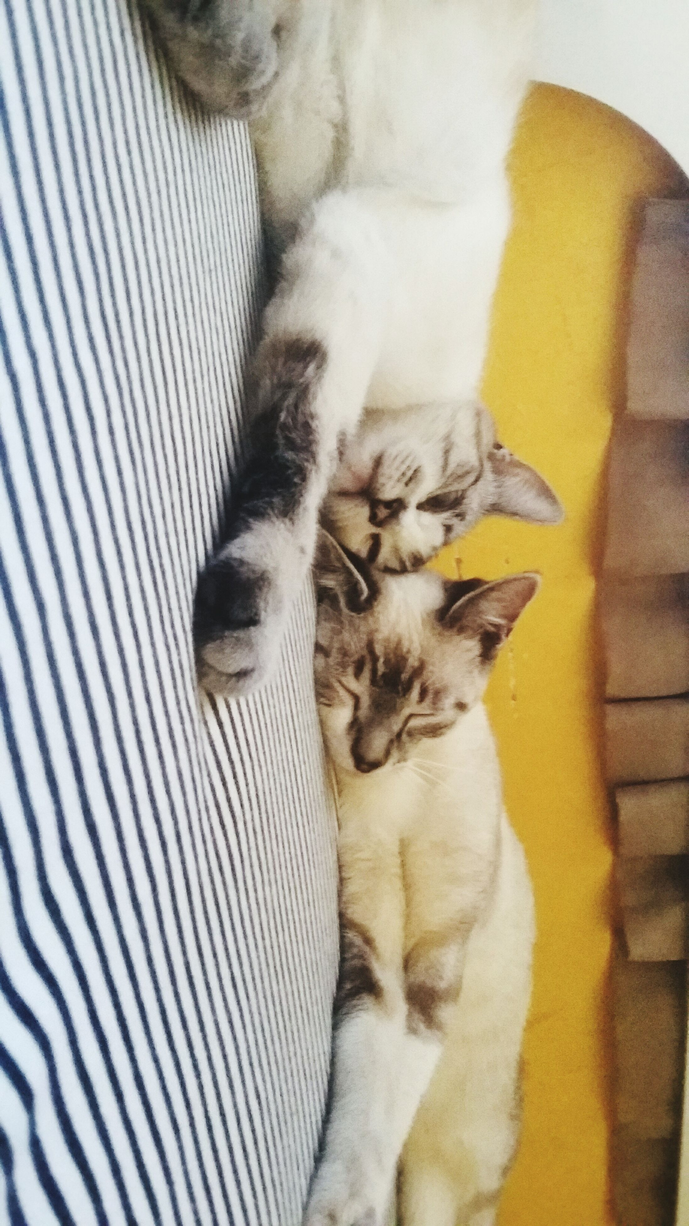 animal themes, mammal, pets, one animal, domestic animals, domestic cat, indoors, feline, cat, relaxation, whisker, young animal, sleeping, resting, two animals, lying down, togetherness, high angle view, home interior, kitten