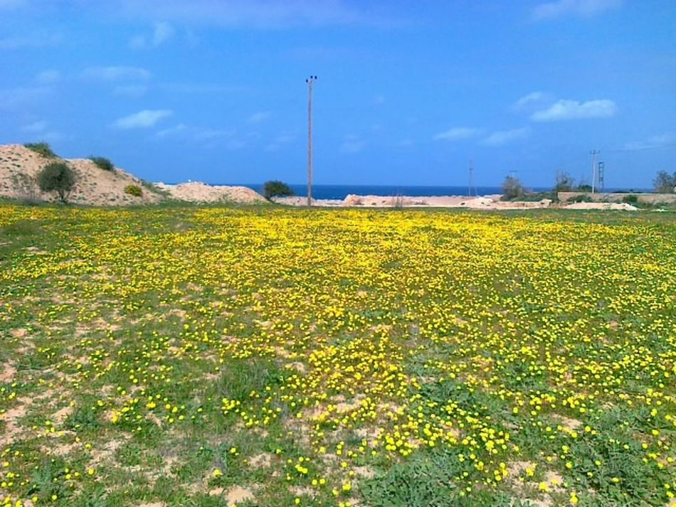 some springy day at Home in Azzawya Libya