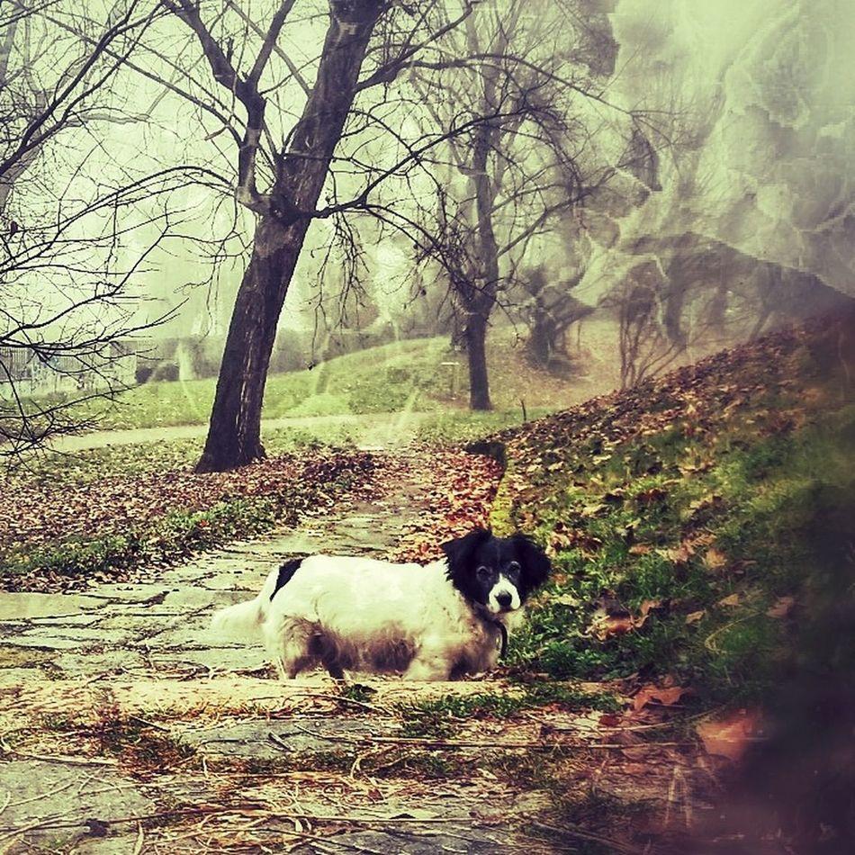 Ugo Parco Lambro Milano Nature Dogs Wonderworld Animal Themes Animals In The Wild No People Domestic Animals Nature