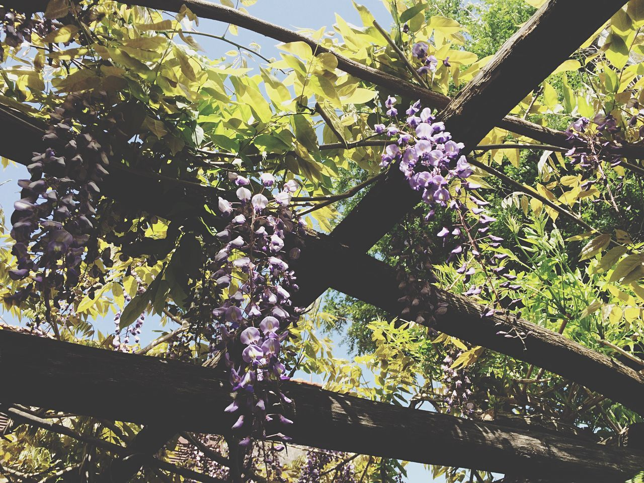 Lille Violet Getting Inspired Spring IPhoneography Taking Photos Flowers Glicine Beautiful Nature Nature_collection Nature Lookingup