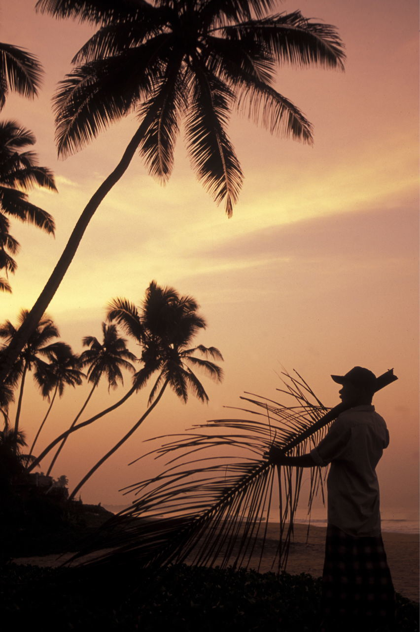 palm tree, sunset, silhouette, real people, tree, sky, beauty in nature, beach, nature, one person, scenics, outdoors, tranquil scene, sea, leisure activity, lifestyles, water, tranquility, rear view, standing, growth, women, horizon over water, day, people