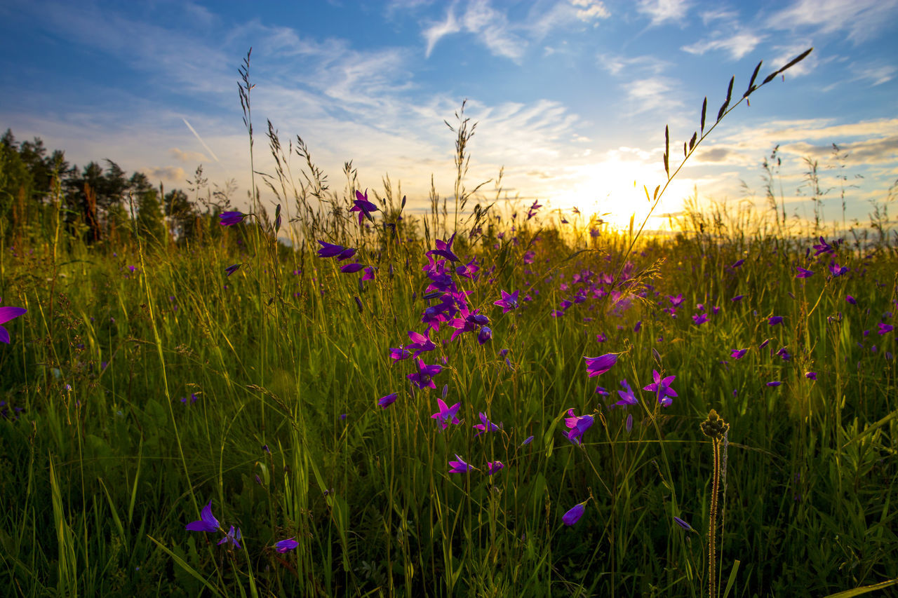Beauty In Nature Cereal Plant Cloud - Sky Day Field Grass Growth Landscape Nature No People Outdoors Plant Rural Scene Scenics Sky Sunset Tranquil Scene Tranquility