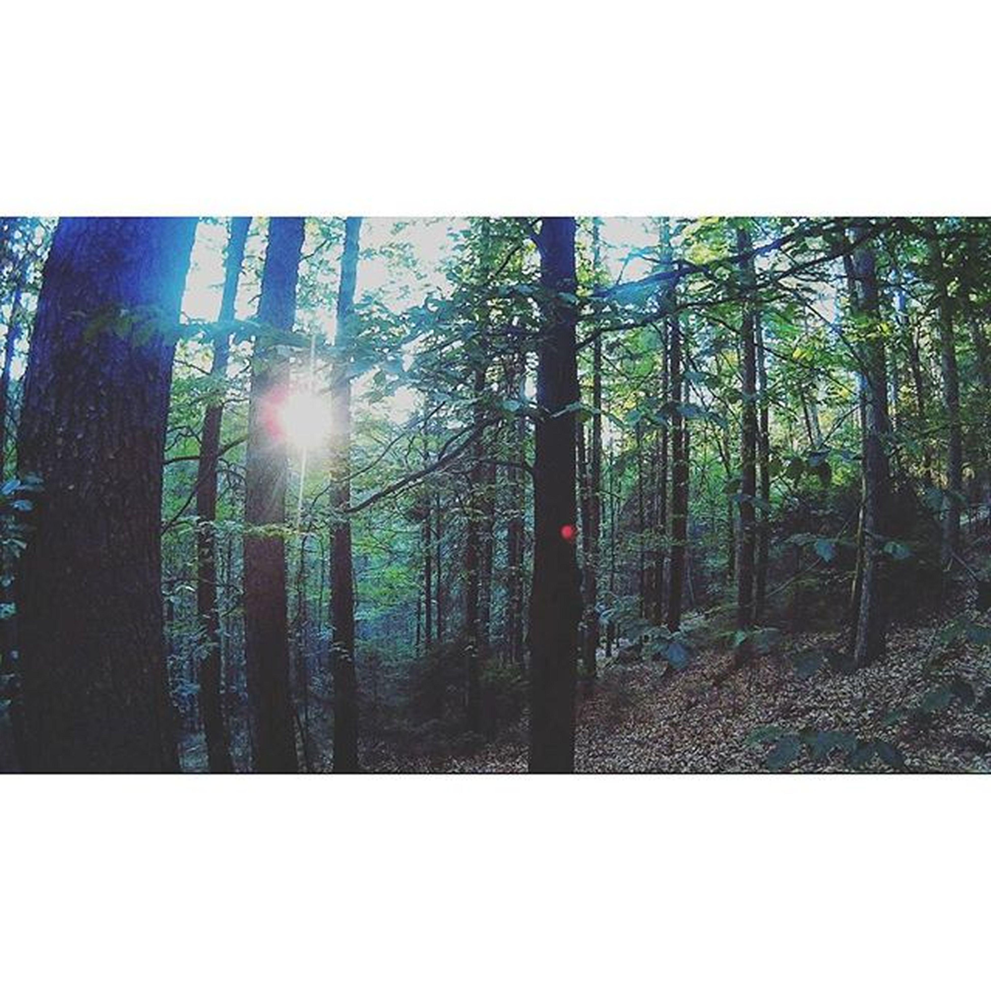 Was für ein Farbspiel...📷mit aktioncam geschossen 🔫. Qumoxsj4000 Imwald Nachmcamp Bäume Fisheilook Krummerbaum😂😂