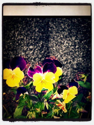 flowers in Duisburg by Blubblub