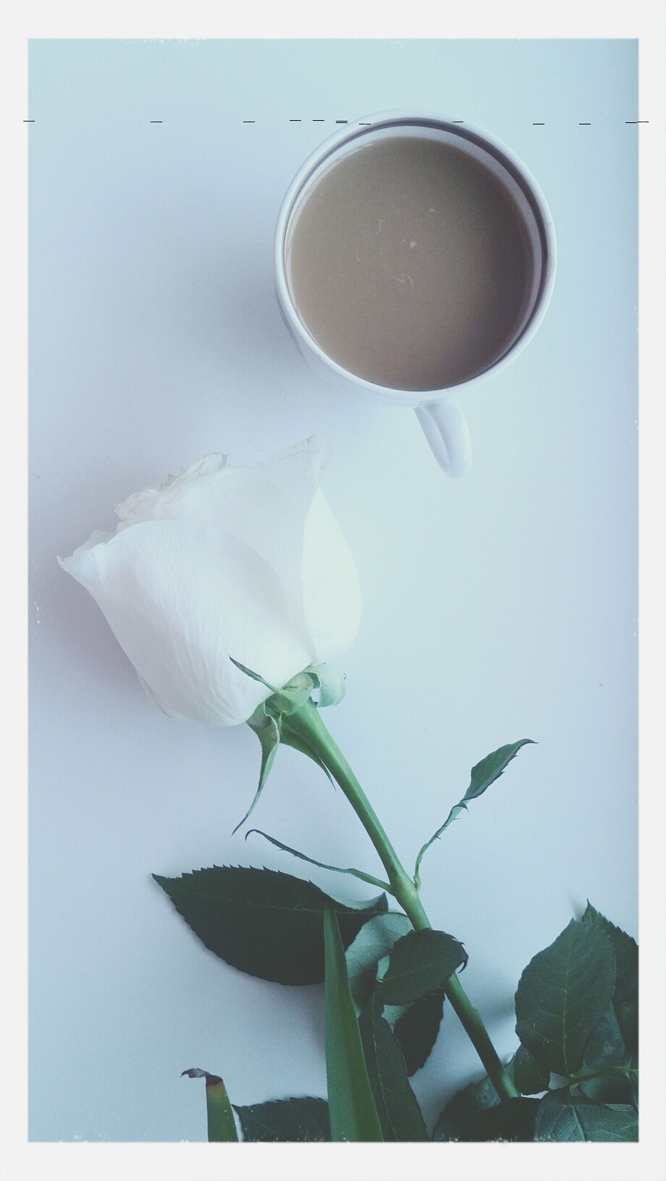 transfer print, freshness, flower, indoors, auto post production filter, close-up, leaf, table, fragility, white color, food and drink, growth, plant, nature, no people, beauty in nature, petal, drink, still life, vase