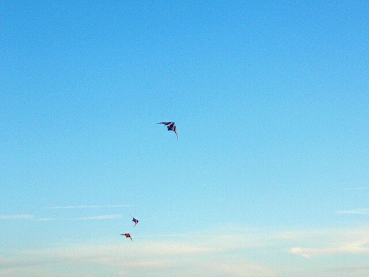 Flying Kite Kite Flying Cloud Outdoors Flying High Flying A Kite Sky