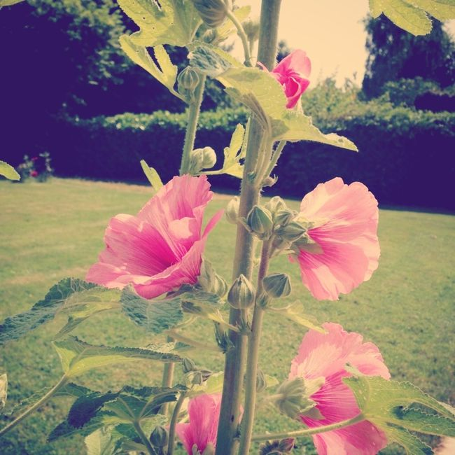 Flowers Enjoying The Sun Relaxing Pink