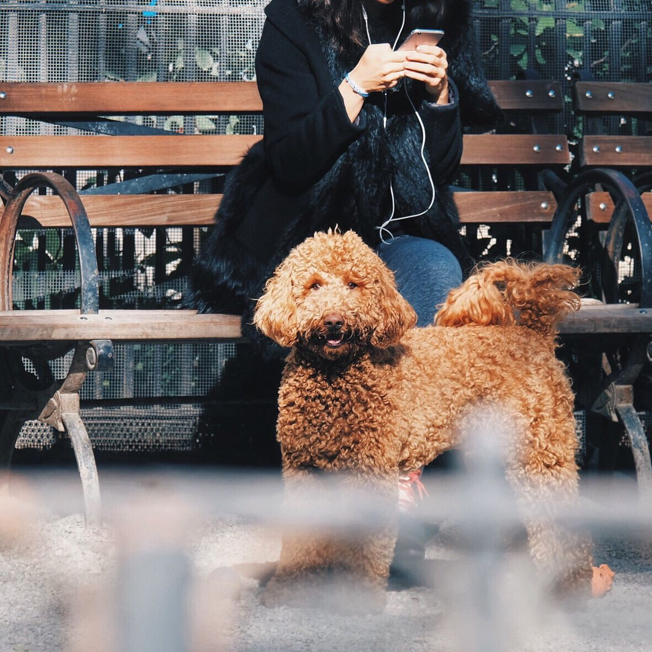 Beautiful stock photos of technology,  Bench,  Brown,  Canine,  Communication