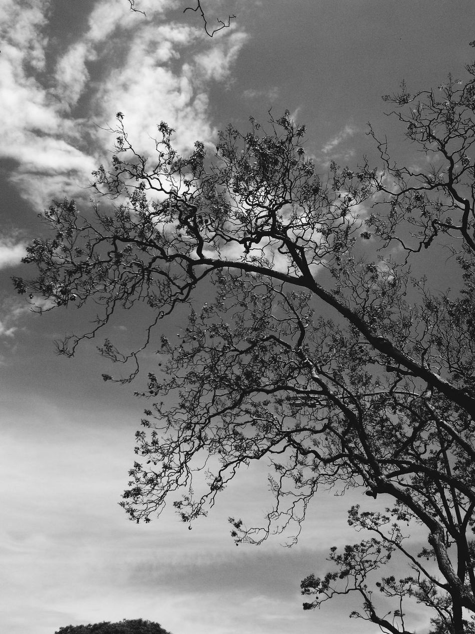Jakaranda Tree Buenos Aires, Argentina  Photo Old Pic  Black And White VSCO Vscocam Vsco Buenos Aires Photography First Eyeem Photo