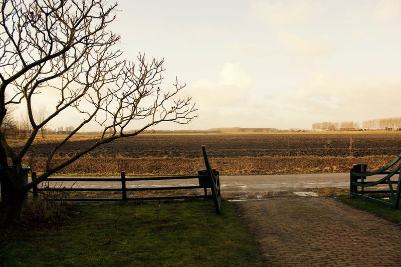 Bare Fields Bare Tree Beauty In Nature Brown Countryside Day Empty Field Fence Field Full Length Grass Nature Outdoors Sky Tree Winter