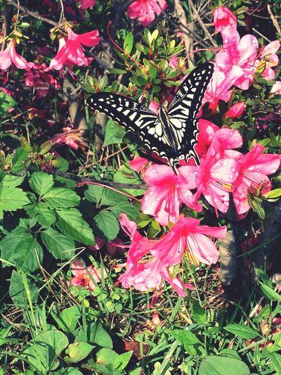 Landscape butterfly