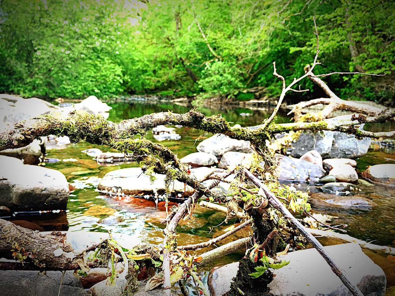 View Of River Passing Through Forest