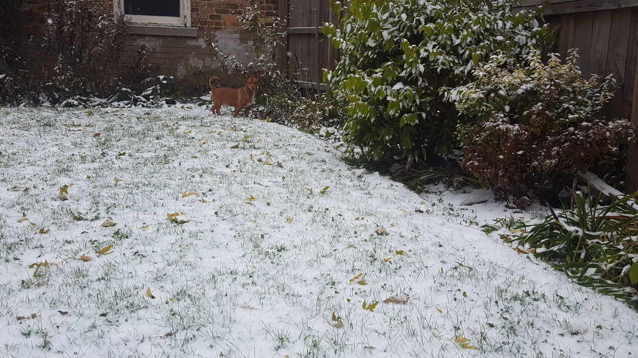 Animal Themes Dog In Backyard Dog In The Snow First Snowfall No Edit No Filter One Animal Snow Covered