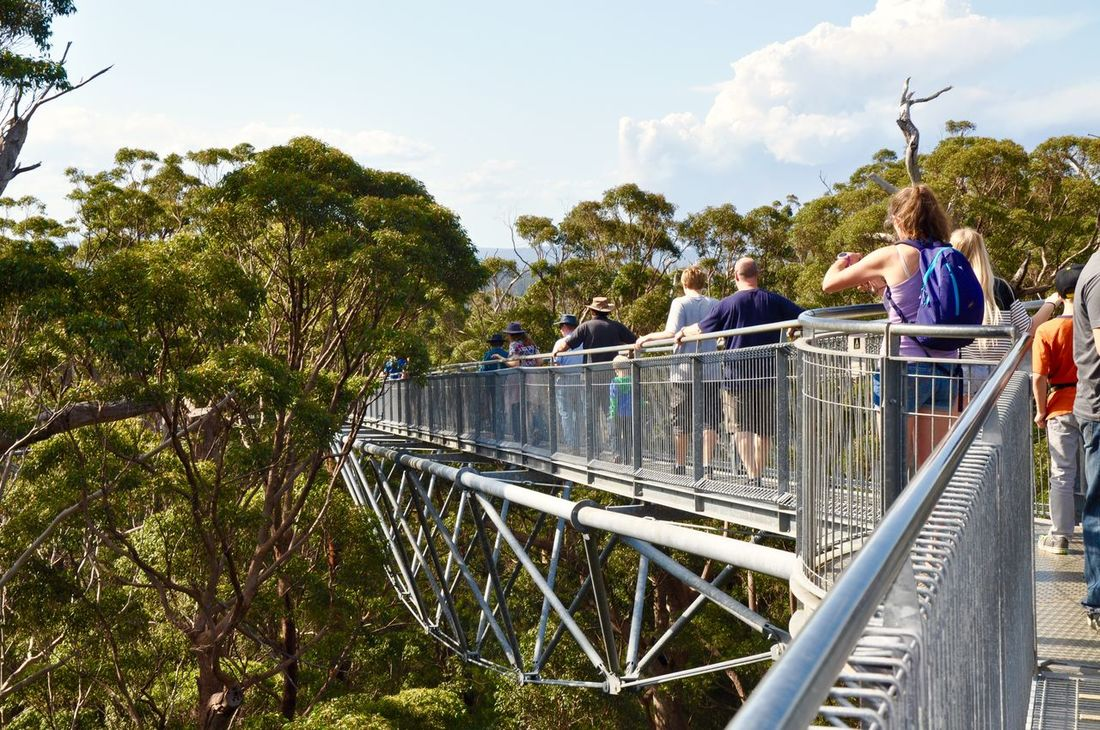 Tourists on the unique tree top walk bridge in the Valley of the Giants near Denmark, Western Australia. Architecture Bridge Canopy Cloud - Sky Day Elevated View Exploring Forest Green Green Color Lush Foliage Pedestrian Walkway Person Railing Sunny Tingle Trees Tourist Attraction  Tourists Tree Tree Top Walk Valley Of The Giants Walking Walkway Western Australia Wilderness