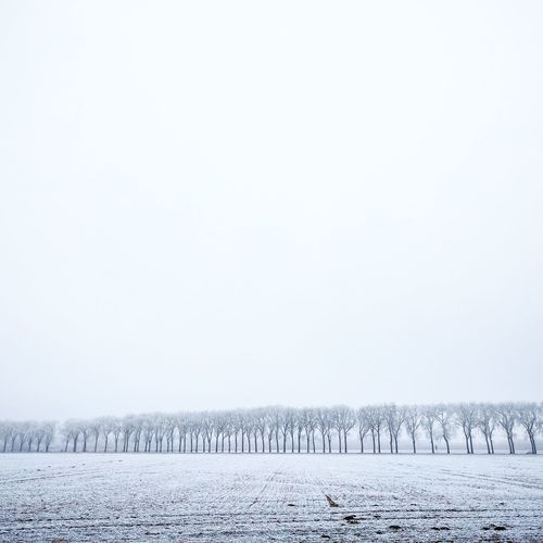 Bright size life Winter Snow Nature Landscape No People Cold Temperature Rural Scene Freshness Outdoors Snowing Day Sky Shootermag_france TheMinimals (less Edit Juxt Photography) Freezing ❄ Shootermag Vaux Le Vicomte Beauty In Nature Black & White Black And White Blackandwhite Trees