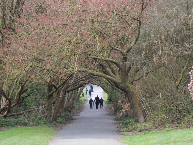 Arching Trees Pathway Trees Branches