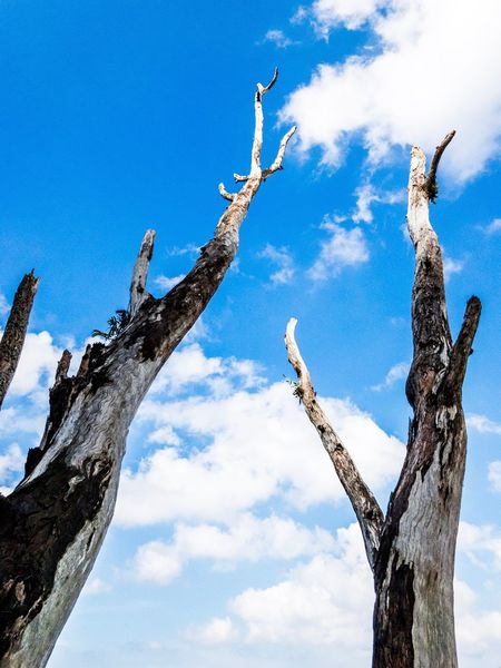 Beyond. Sky Blue Blue Sky Tree Tree Trunk Trees And Sky Two For Joy Clouds Nature Portrait Of Trees Portraitmode