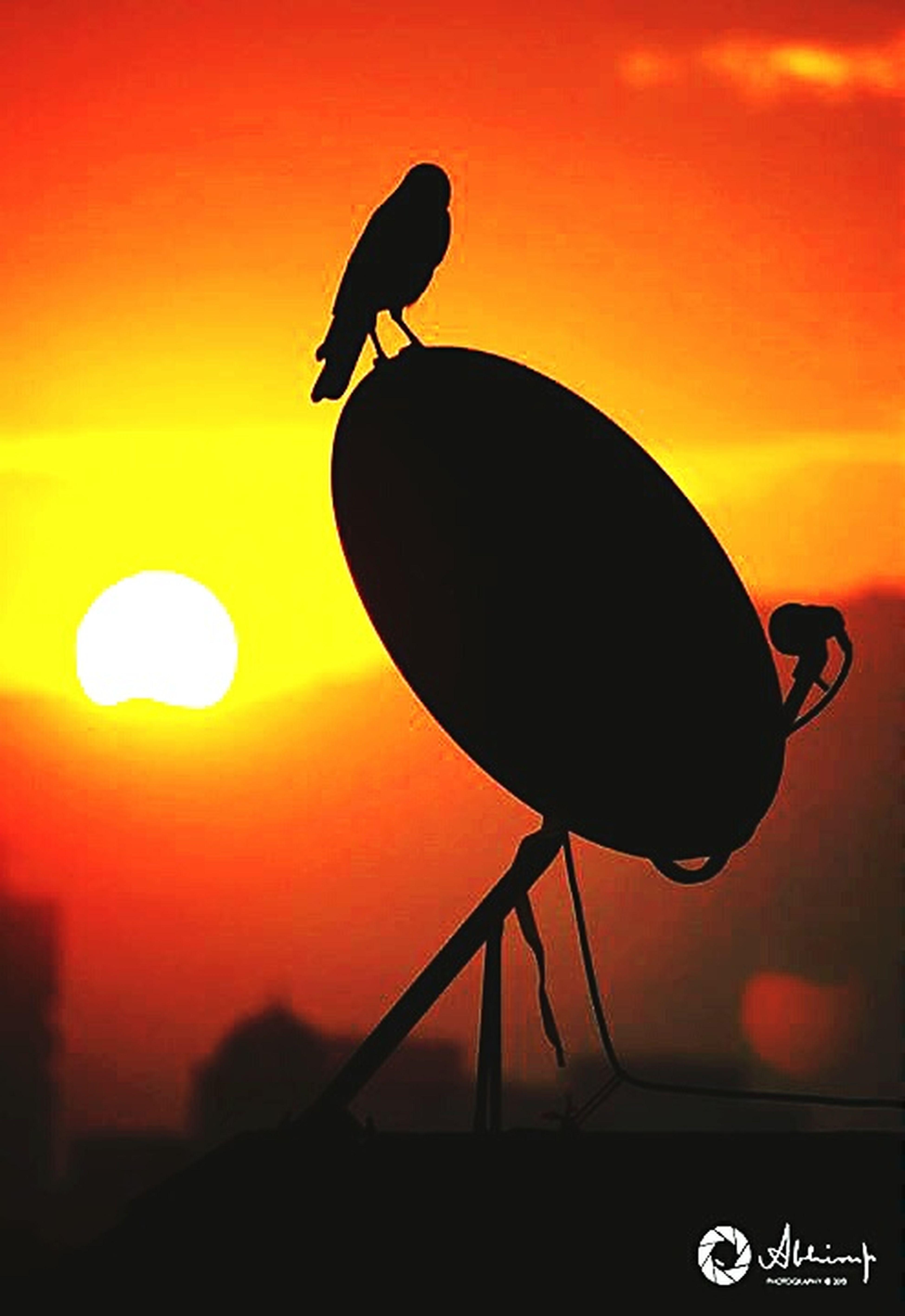 The winter morning glare... Morning Light Morning Sky Winter2014 Mumbai Silhouette Sunrise Bird Colors