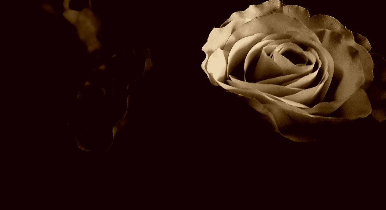 Night Rose - Flower Flower Head Night Black Background Freshness Fragility Beauty In Nature Drastic Edit As I See It Modern Art My Photos Adis Art Photo Art Tadaa Community Art Photography Creativity Fine Art Macro Showcase January Black And WhiteBerlin, Germany  Vintage Colors Abstract Adapted To The City