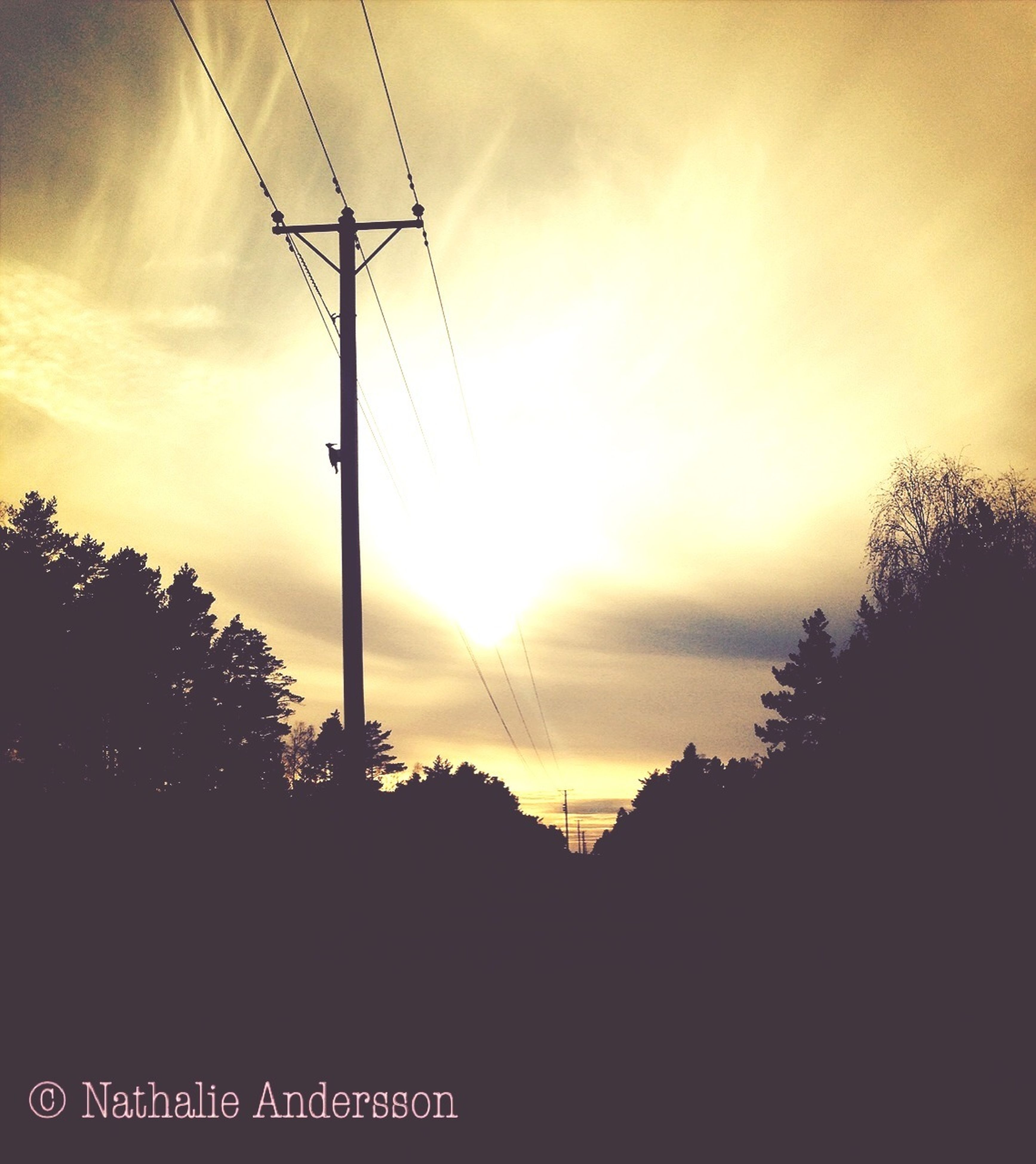 power line, electricity pylon, sunset, power supply, electricity, silhouette, cable, fuel and power generation, connection, sky, technology, tree, power cable, low angle view, cloud - sky, sun, orange color, beauty in nature, nature, scenics