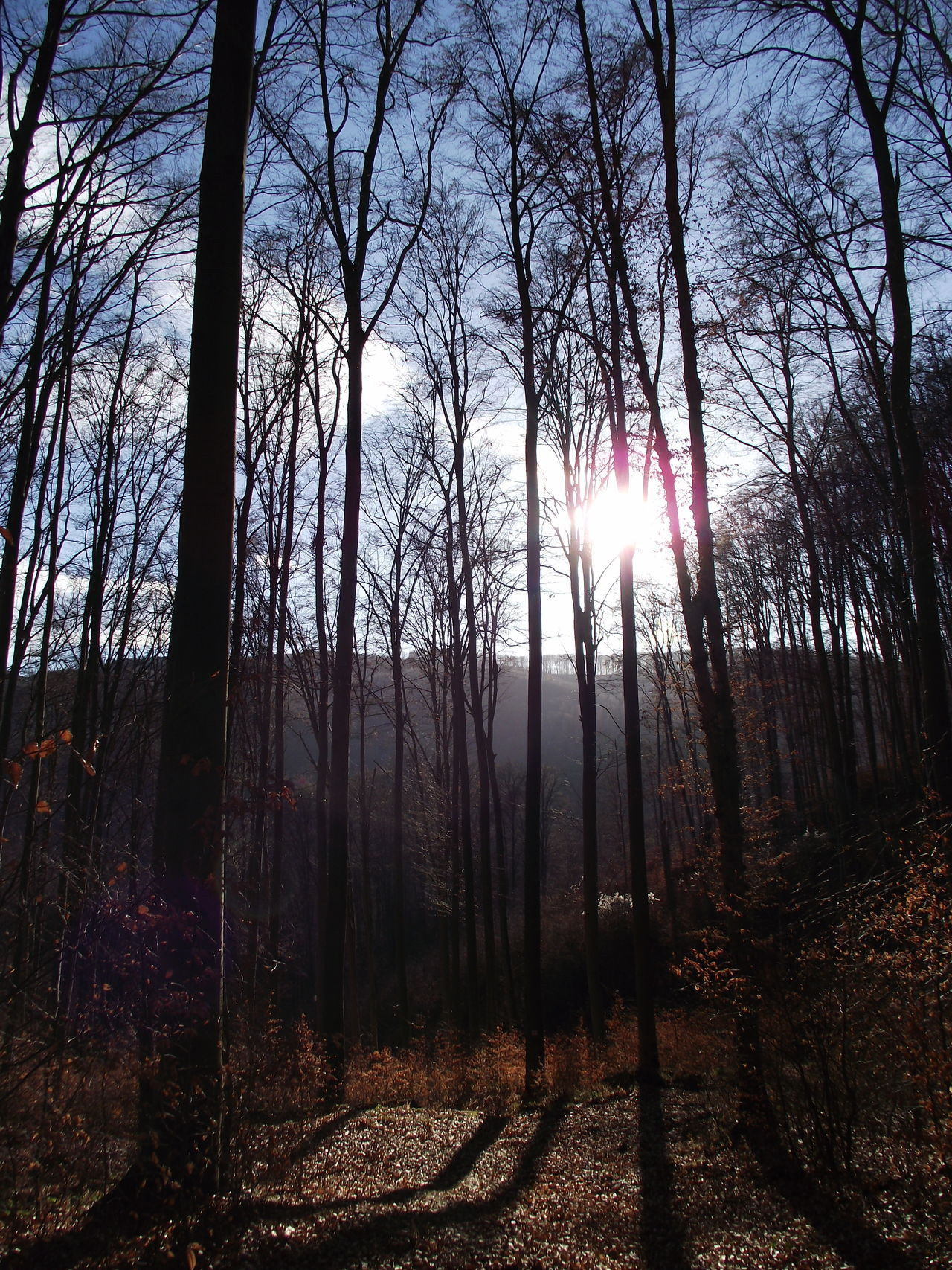 Beauty In Nature Bükk Day Forest Hungary Nature No People Sky Sun Sunlight Tranquility Tree